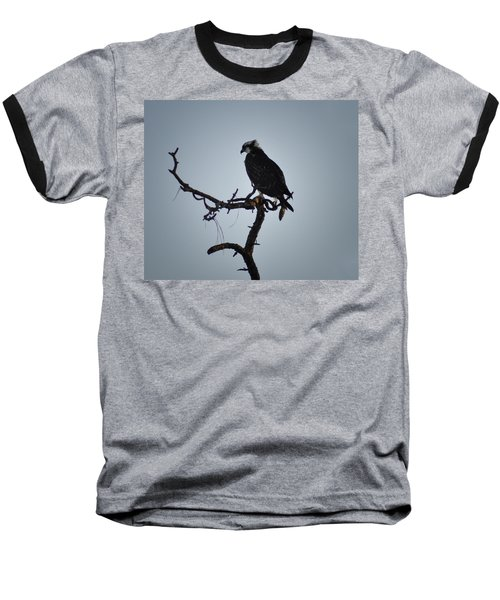 The Osprey Baseball T-Shirt by Bill Cannon