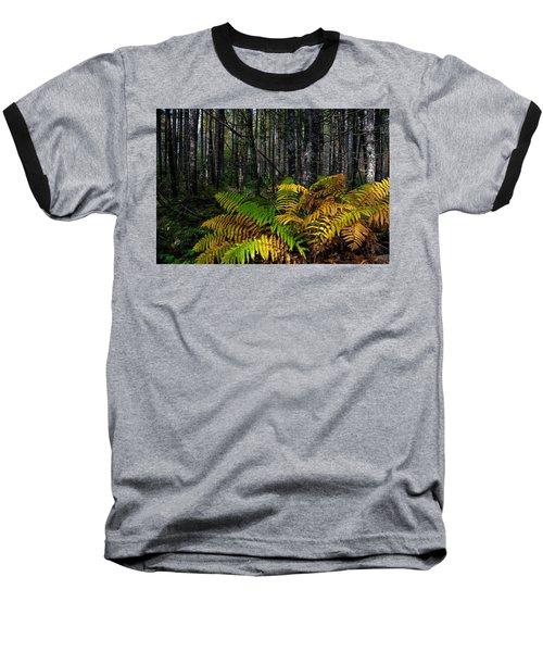 Where The Ferns Grow Baseball T-Shirt by Ronald Lutz