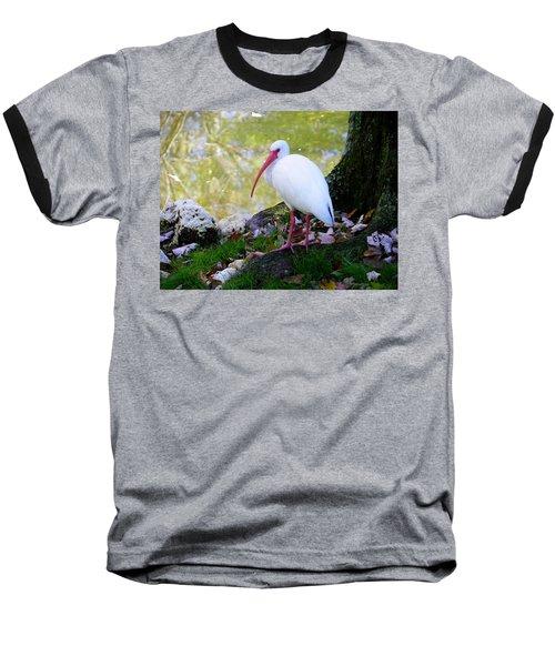 White Ibis Baseball T-Shirt by Judy Wanamaker