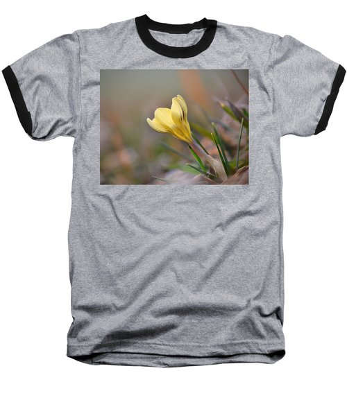 Yellow Crocus Baseball T-Shirt