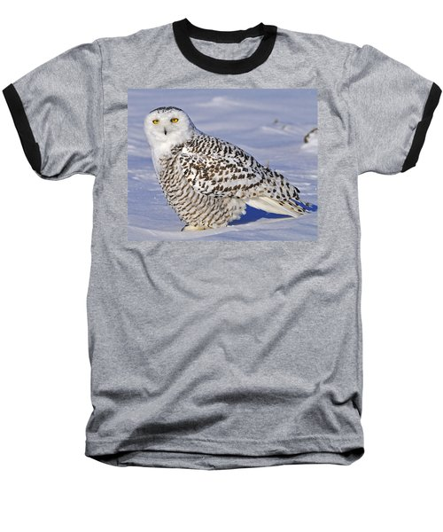Young Snowy Owl Baseball T-Shirt