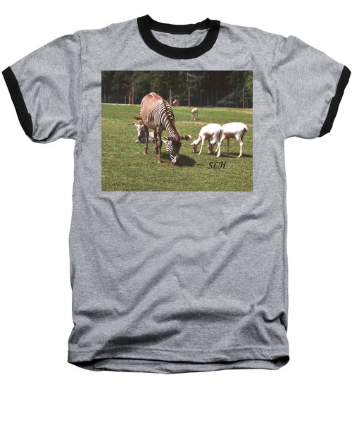 Zebra's Grazing Baseball T-Shirt