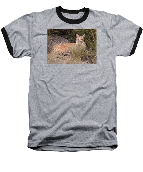 Bobcat At Rest Baseball T-Shirt