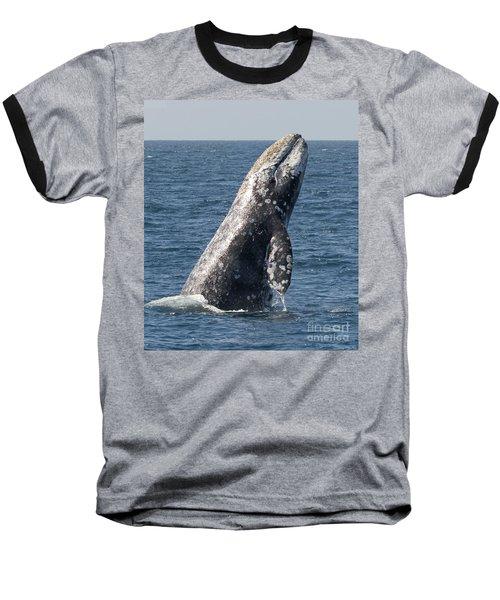 Breaching Gray Whale In Dana Point Baseball T-Shirt by Loriannah Hespe