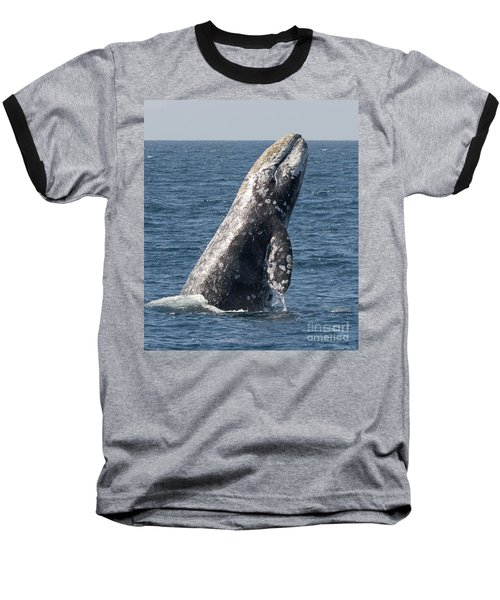 Breaching Gray Whale In Dana Point Baseball T-Shirt