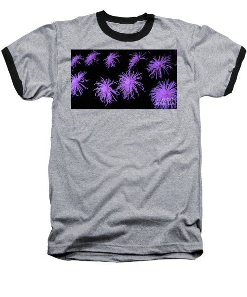 Chrysanthemums In Purple Baseball T-Shirt by Jeannie Rhode