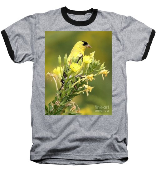 Goldfinch Baseball T-Shirt by Debbie Stahre