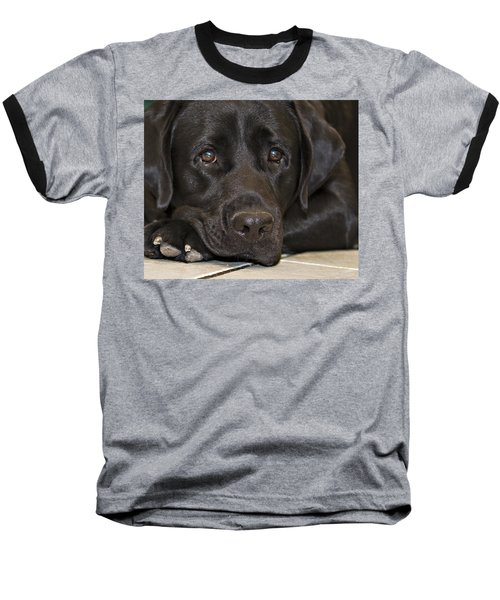 Labrador Retriever A1b Baseball T-Shirt