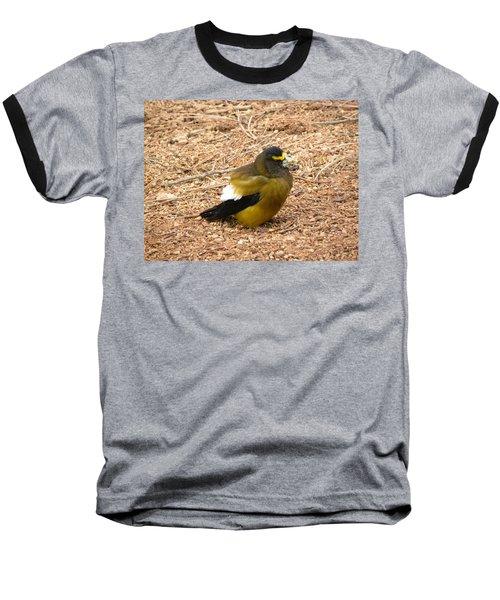 Evening Grossbeak Divide Co Baseball T-Shirt