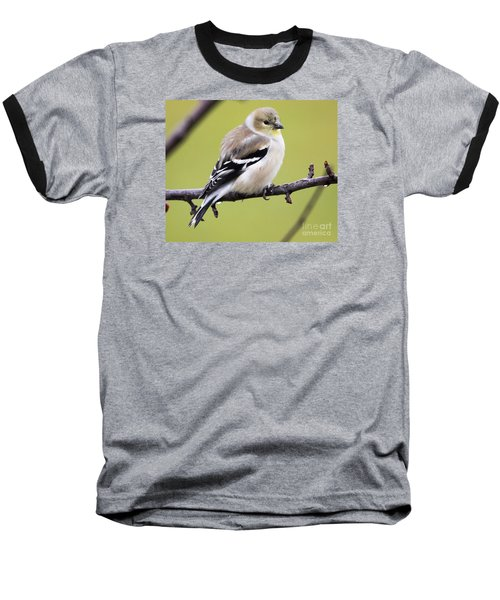 American Goldfinch Baseball T-Shirt by Ricky L Jones