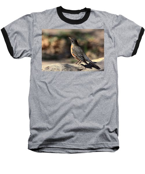 American Robin On Rock Baseball T-Shirt by Sheila Brown
