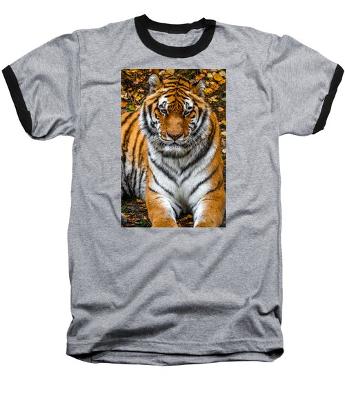 Amur Tiger  Baseball T-Shirt