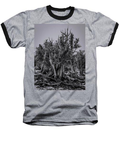 Ancient Bristlecone Pine Baseball T-Shirt