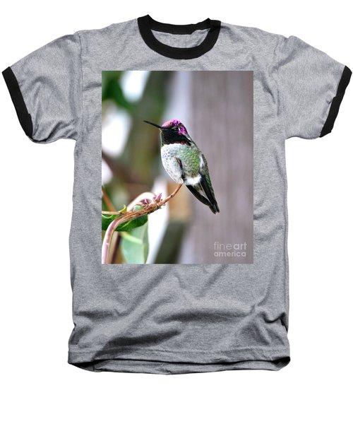 Anna's Hummingbird Baseball T-Shirt