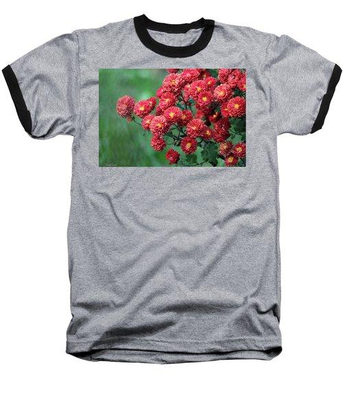 Beautiful Red Mums Baseball T-Shirt