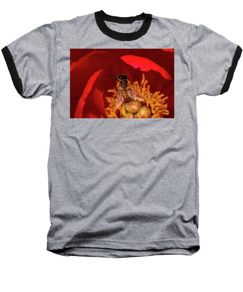 Baseball T-Shirt featuring the photograph Bee by Jay Stockhaus