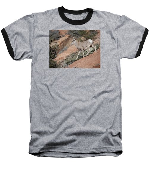 Big Horn Sheep Baseball T-Shirt by Tyson and Kathy Smith