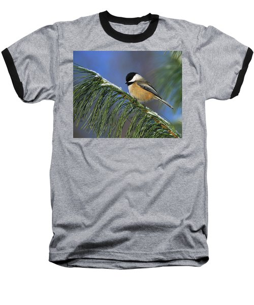 Black-capped Chickadee Baseball T-Shirt by Tony Beck