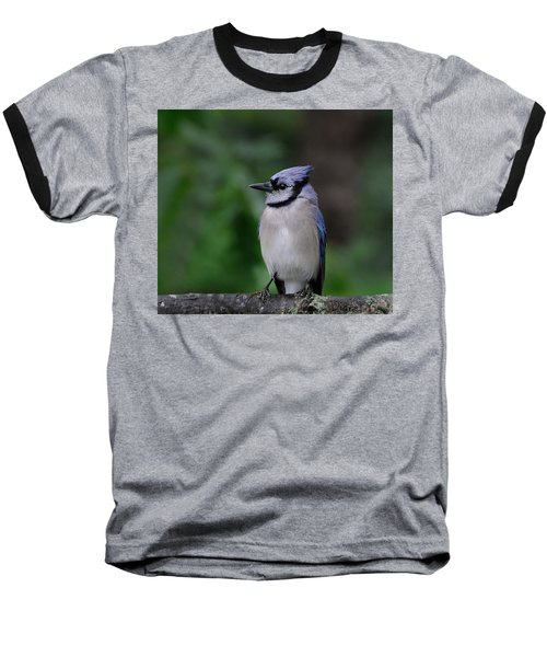 Blue Jay Baseball T-Shirt by Diane Giurco