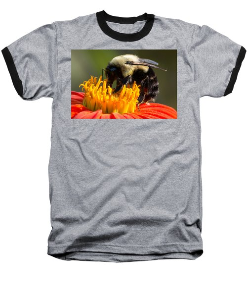 Bumble Bee Baseball T-Shirt