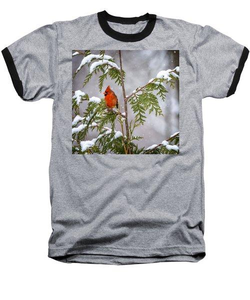 Cardinal In The Snow Baseball T-Shirt