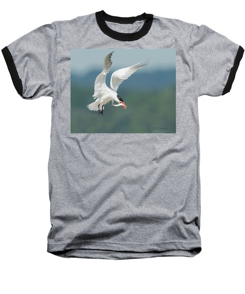 Caspian Tern With Fish Baseball T-Shirt
