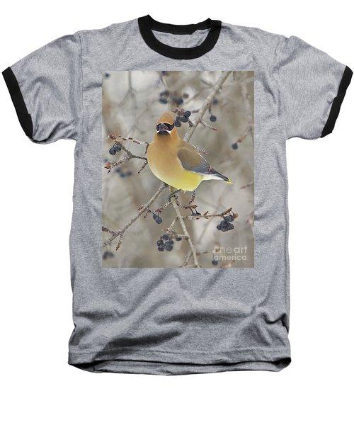 Cedar Wax Wing Baseball T-Shirt by Robert Pearson