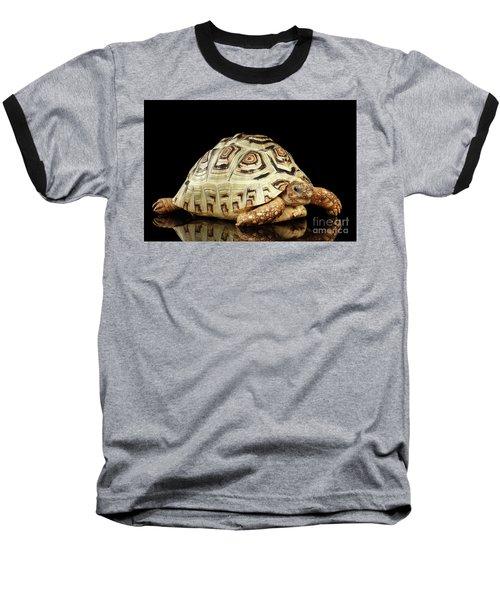 Closeup Leopard Tortoise Albino,stigmochelys Pardalis Turtle With White Shell On Isolated Black Back Baseball T-Shirt