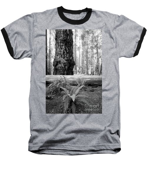 Coastal Redwoods  Baseball T-Shirt