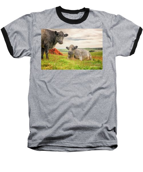 Colorful Highland Cattle Baseball T-Shirt by Patricia Hofmeester