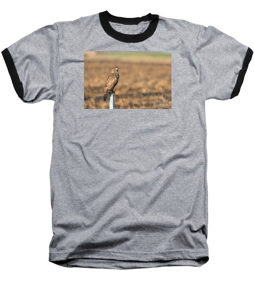 Baseball T-Shirt featuring the photograph Common Buzzard Along The Highway Nis - Budapest by Jivko Nakev