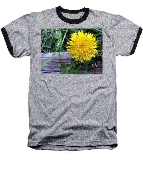 Baseball T-Shirt featuring the photograph Dandelion by Robert Knight