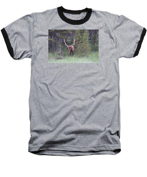 Bull Elk Rocky Mountain Np Co Baseball T-Shirt