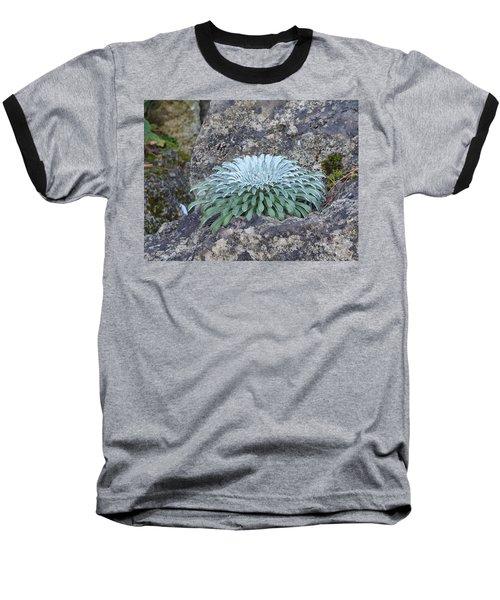 Exotic Plant Baseball T-Shirt