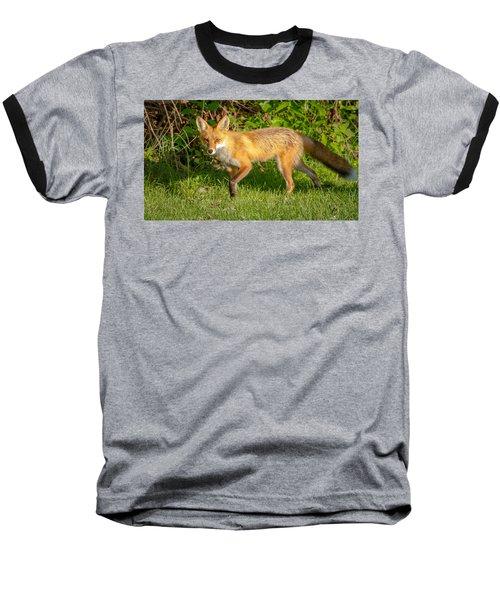 Fox Portrait  Baseball T-Shirt by Brian Caldwell