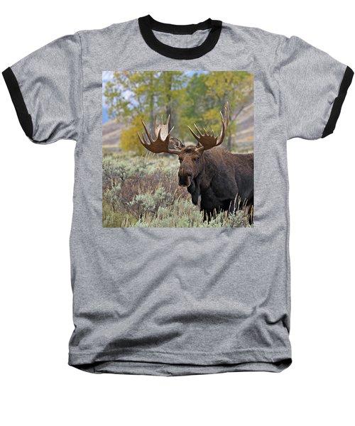 Handsome Bull Baseball T-Shirt