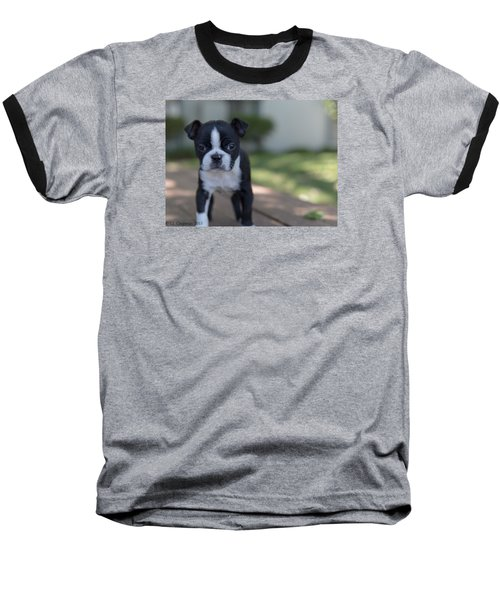 Harley As A Puppy Baseball T-Shirt