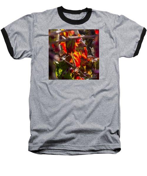 Hot Autumn Colors In The Vineyard 05 Baseball T-Shirt by Arik Baltinester