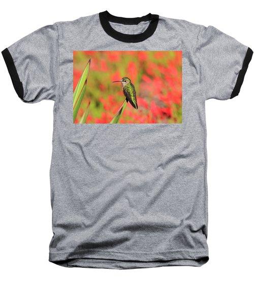 Hummingbird #5 Baseball T-Shirt