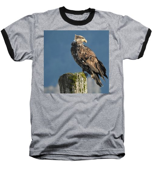 Immature Bald Eagle Baseball T-Shirt
