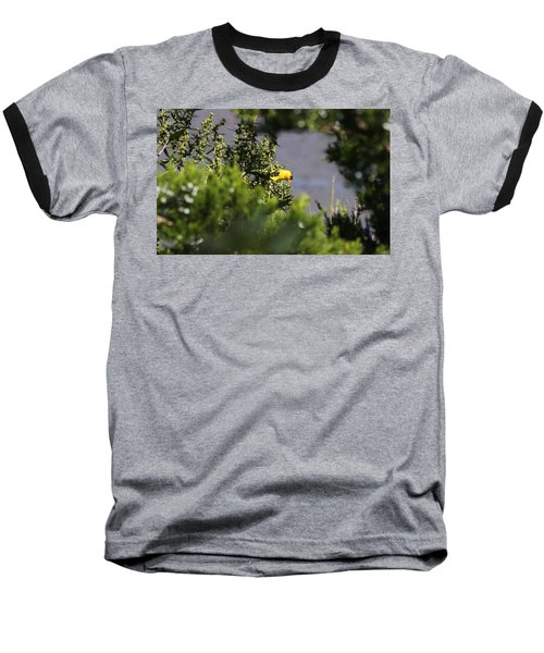 Is It Safe To Come Out? Baseball T-Shirt