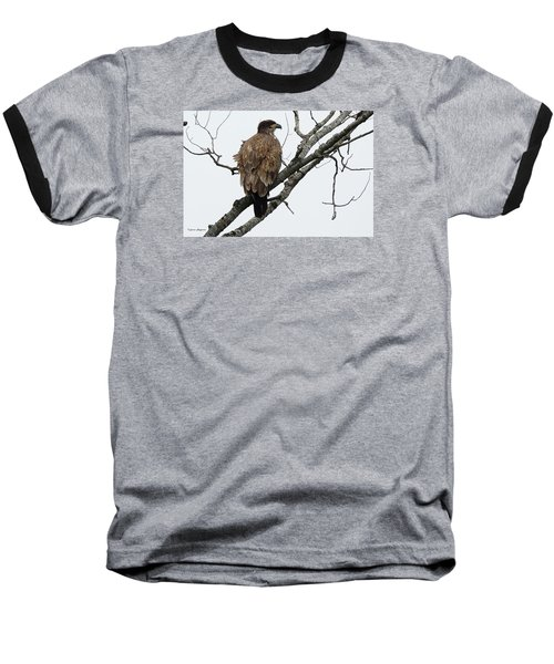 Baseball T-Shirt featuring the photograph Juvenile Eagle  by Steven Clipperton