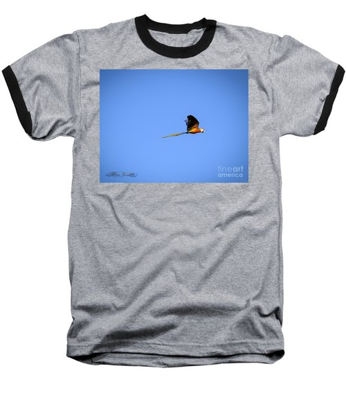 Macaw In Flight Baseball T-Shirt by Melissa Messick
