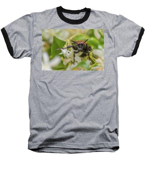 Baseball T-Shirt featuring the photograph Mammoth Wasp Megascolia Maculata Maculata by Jivko Nakev