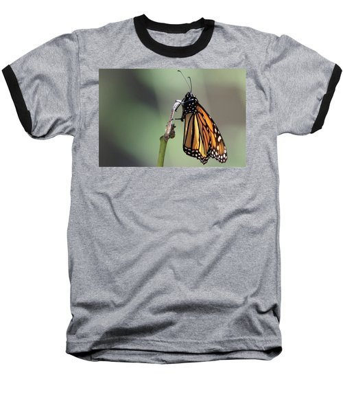 Monarch Butterfly Stony Brook New York Baseball T-Shirt
