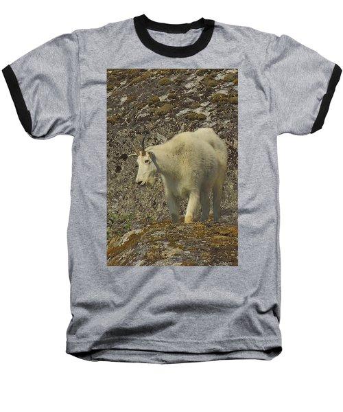 Mountain Goat Ewe Baseball T-Shirt