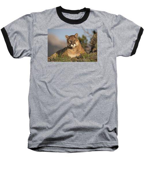 Mountain Lion Portrait North America Baseball T-Shirt