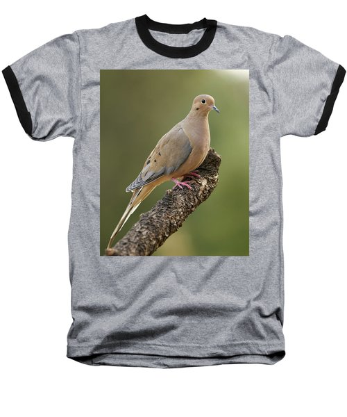 Baseball T-Shirt featuring the photograph Mourning Dove by Doug Herr