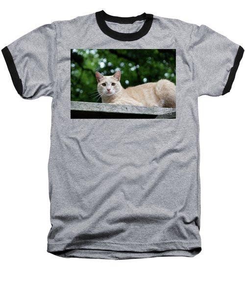 Orange Tabby Baseball T-Shirt