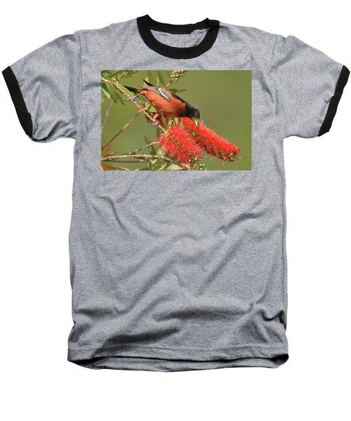 Orchard Oriole  Baseball T-Shirt by Alan Lenk